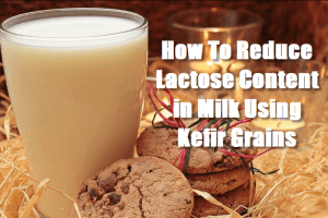 How To Reduce Lactose Content in Milk Using Kefir Grains
